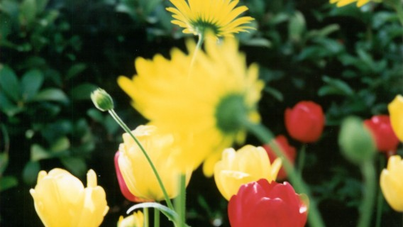 INCA_FLOWERS