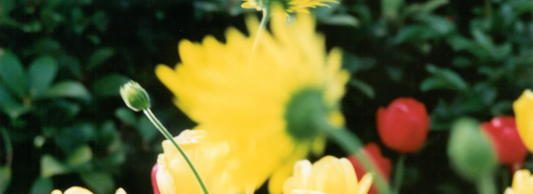 INCA_FLOWERS_1100x400