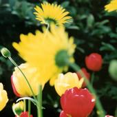 incandescent_flowers_170